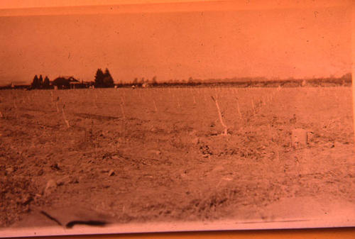 This slide is of a photograph of the Corona Foothill Lemon Company in 1917, located on West Ontario Street.  The field is in the foreground of the image while the structures can be somewhat seen in the background.  SLIDE CONDITION:  Good, there is a reddish cast to the deteriorating film.