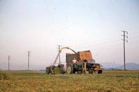 Cutting an Alfalfa Field