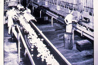 Women working in the packing house