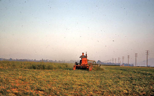 This slide is of a man on a tractor harvesting alfalfa on River Road.  SLIDE CONDITION:  Good