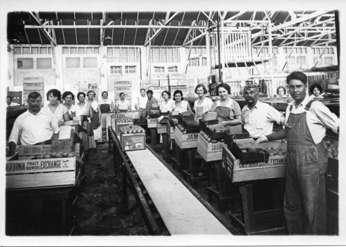 Jameson Packing House. From left row, front to back: Jim Palerito, Irene Navarro, Rose Corcelli, Mabel Danieri, Carmella Danieri. Right row, front to back: Tom Danieri, Joaquin Flores, Nancie Danieri, Merced Miller, unknown, Bonnie ?, Pasqual DiGeorge, Ray Reymondo. Two women in the very back: Lupe Flores and Rose Pino.