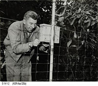 Photo - c. 1950's - Frost warning system installed avocado grove.