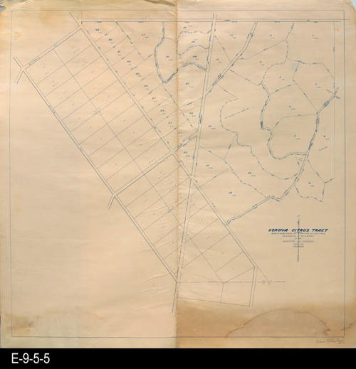 "This Corona Citrus Tract map has the following legal descriptsion:  Being a subdivision of a portion of sections 24, T.3.S.R7.W and 19, T.3.5.R.6.W.  MEASUREMENTS:  34"" X 35, CONDITION:  The text on the map are dark and sharp.  The paper is brittle and becoming brown in several areas.  Both the upper left hand and lower right hand corners show staining.  There is a 2"" tear on the center fold line starting from the bottom edge of the paper.  COPIES:  1."