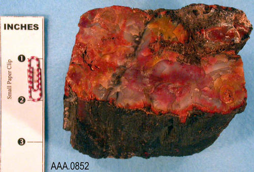 This artifact is a piece of petrified wood.  Its age and source are unknown.