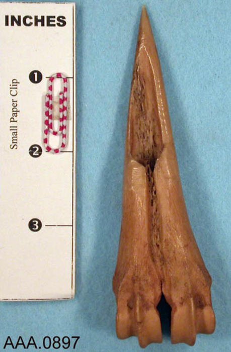 This artifact is a deer bone awl.  Its age and source are unknown.