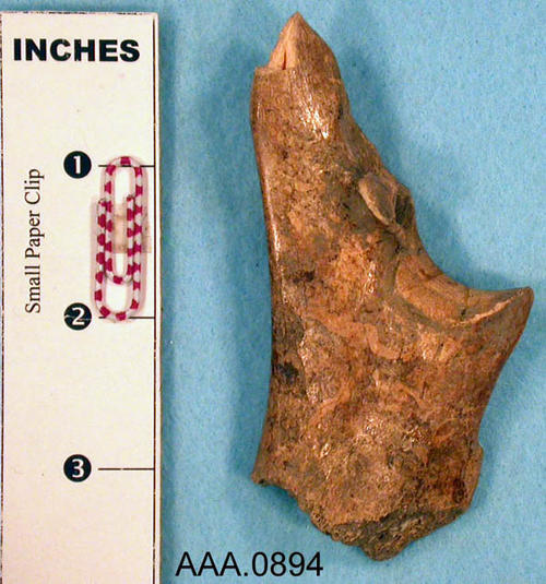 This artifact is a deer, ulna bone, awl.  It is probably from the Tennessee Valley. C. 1000-500 B.C.