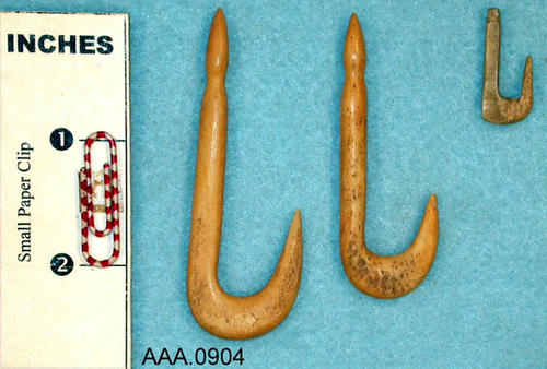 This artifact collection consists of three fish hooks.  Their age and source are unknown.