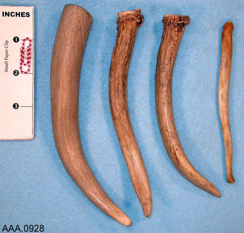 This artifact collection consists of four deer antler tines.  Their age and source is unknown.