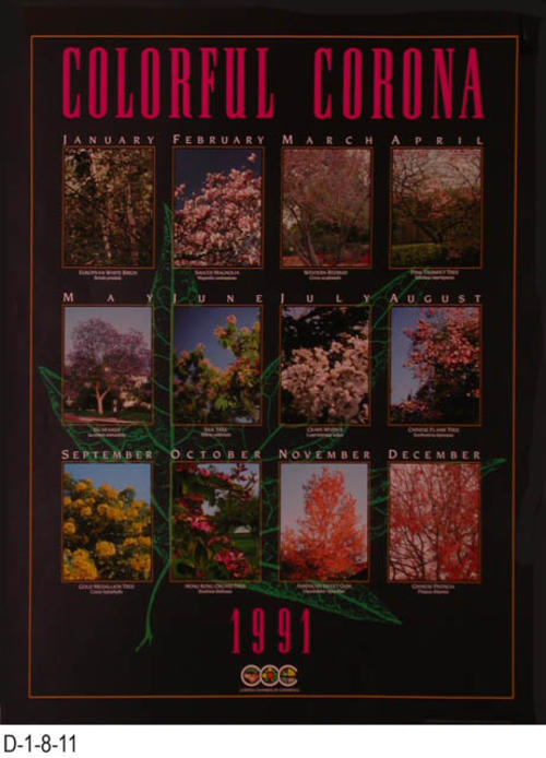 "This poster has a color photo of a tree for each month of the year.  The September tree is a Cold Medallion Tree and the photo is courtesy of the Los Angeles State and County Arboretum.  MEASUREMENTS:  24"" X 18"" - CONDITION:  Very Good - COPIES:  3."