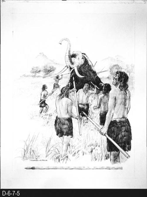 "This picture depicts a group of men hunting a mammouth with spears.  HISTORICAL INFORMATION on the BACK:  Sandia Man Hunting successfully hunted gian mammouth with crude spears.    MEASUREMENTS:  15 1/2"" X 12"" - CONDITION:  This art work is kept in a protective sleeve.  It is in excellent condition. - COPIES:  1."