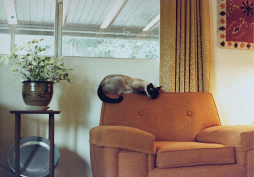Interior of home at West Rancho Road with family cat, Simon.