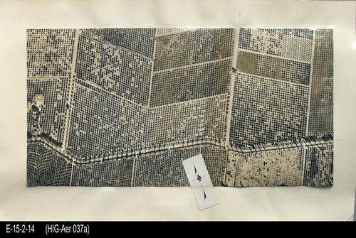 "This is a matt mounted aerial view of a Citrus Grove in Corona, Ca.  at Chase Dr. and Gilbert.  On the back of the photo are the words ""huff hazard.""  Also pictured is the Shamma house at Chase and Hudson. - MEASUREMENTS:  MATT: 11 1/4"" x 18"" - PHOTO:  8"" x 15 5/8"" - CONDITION:  This photo is in good condition. This photograph is in a protective sleeve. - COPIES:  1"