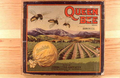 "This slide is of the ""Queen Bee"" brand citrus label. Packed by the Corona Citrus Association - Riverside County, California.  SLIDE CONDITION:  Good."