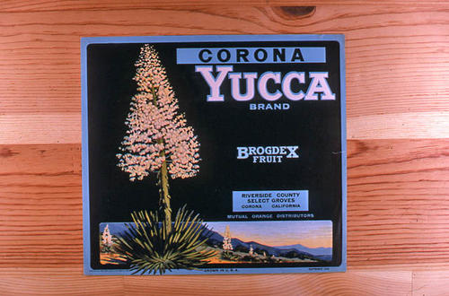 "This slide is of the ""Yucca"" brand.  This product was grown and packed by Brogdex Fruit. - Corona, Riverside County, California. - SLIDE CONDITION:  Good."