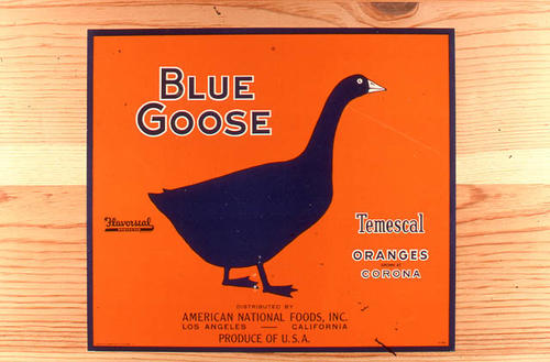 "This slide is of the ""Blue Goose"" brand citrus label. Distributed by American Natural Foods, Inc. -  Los Angeles, California - Temescal Oranges - Corona, California. SLIDE CONDITION:  Good."