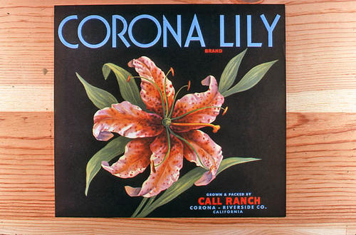 "This slide is of the ""Corona Lily"" brand.  This product was grown and packed by the Call Ranch. - Corona, Riverside Co., California.  - SLIDE CONDITION:  Good."