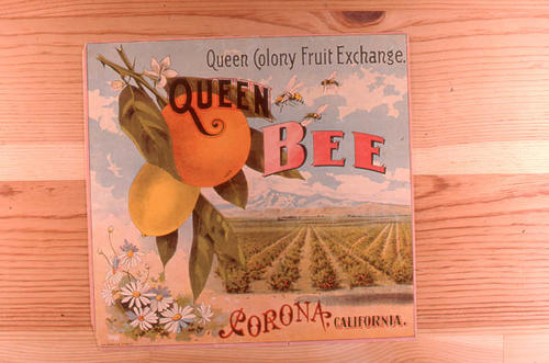 "This slide is of the ""Queen Bee"" brand citrus label.  This product is from the Queen Colony Fruit Exchange - Corona, California.  This slide is almost identical to ART 0064; however, this slide does not have the Sunkist identification and OO64 states Grown and Packed. - SLIDE CONDITION:  Good."