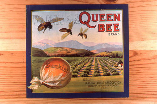 "This slide is of the ""Queen Bee"" Navel Orange brand citrus label. Grown and Packed by Corona Citrus Association - Sunkist - Corona, California  SLIDE CONDITION:  Good."