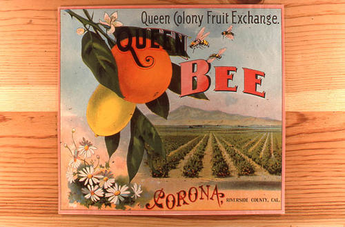 "This slide is of the ""Queen Bee"" brand citrus label. Packed by the Queen Colony Fruit Exchange, Corona, California.  SLIDE CONDITION:  Good."