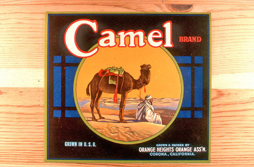 "This slide is of the ""Camel"" brand citrus label. Grown and Packed by the Orange Heights Orange Association - Corona, California.  SLIDE CONDITION:  Good."