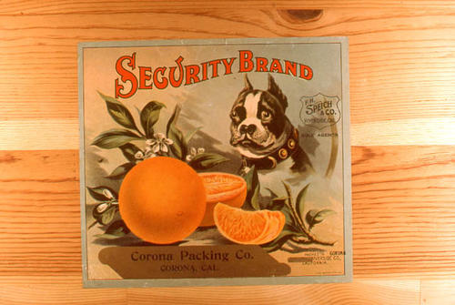 "This slide is of the ""Security"" brand citrus label.  This orange product is from the Corona Packing Co. - Corona California. - F. H. Speich Co. Riverside, California, Sole Agents - SLIDE CONDITION:  Good."