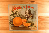 "Citrus label ""Security"" brand oranges - Corona Packing Co. - Corona, California..."