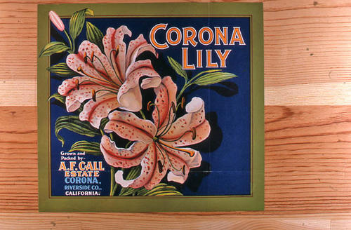"This slide is of the ""Corona Lily"" brand.  This product was grown and packed by the A. F. Call Estate. - Corona, Riverside Co., California.  - SLIDE CONDITION:  Good."