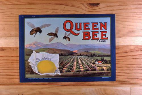 "This slide is of the ""Queen Bee"" brand.  This product was grown and packed by the Corona Citrus Association. - Corona, Riverside County, California. - SLIDE CONDITION:  Good."