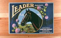 """Citrus label """"Leader"""" brand - Jameson Company - Corona"""