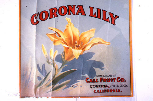 "This slide is of the ""Corona Lilly"" brand citrus label. Grown and Packed by Call Fruit Company - Corona, Riverside County, California.  SLIDE CONDITION:  Good."