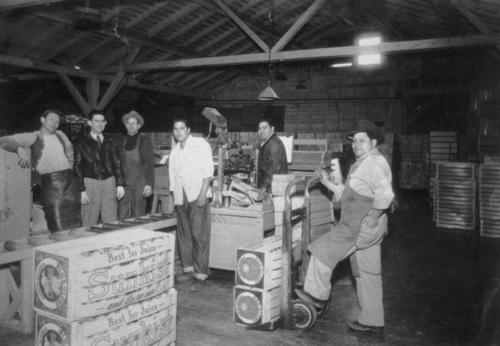 A group of men working at a fruit packing plant.