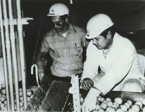 Two men working with eggs at Borden Farm.
