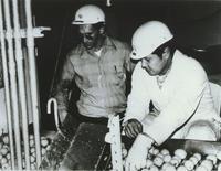 Borden Eggs