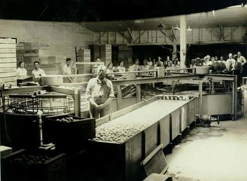 Interior of the Foothill Packing house.