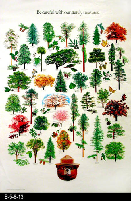 "This fire safety poster features thirty-six different color illustrations of trees and their leaves.  -  MEASUREMENTS:  30"" x 20""  - CONDITION:  Very good. - COPIES: 1."