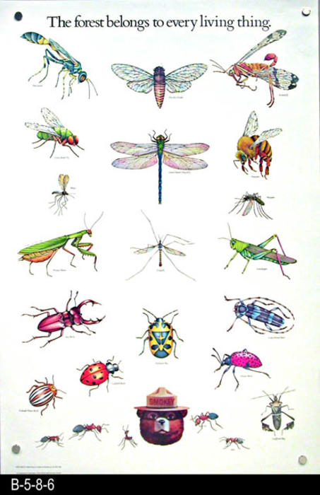 "This fire safety poster features twenty-three color pictures of insects.  -  MEASUREMENTS:  30"" x 20""  - CONDITION:  Very good. - COPIES: 1."