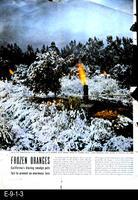 1949 - Frozen Oranges