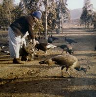 Joseph Varela Feeding the Peacocks