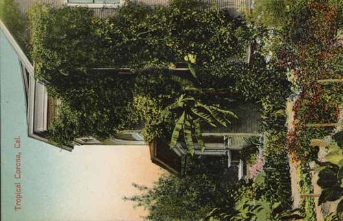 "Color photograph postcard of a variety of plant life growing on the side of a house. Inscription on postcard reads: ""Tropical Corona, Cal."""