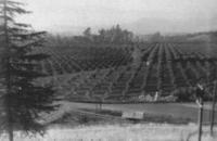 El Cerrito Ranch Groves