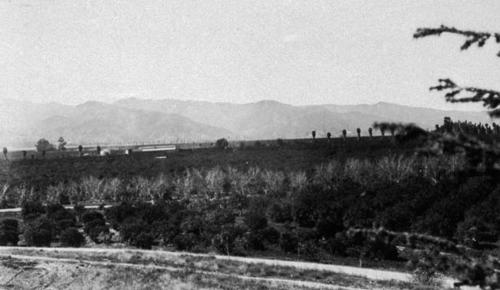 Groves at El Cerrito Ranch, looking south to Cleveland National Forest.  In the distance is the packing house possibly Blue Goose on Chase Drive near Compton Avenue.