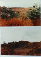 Two Photos of Corona