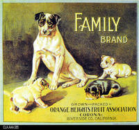 Family (Label Reproduction)