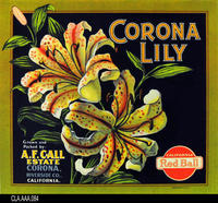 Corona Lily (Label Reproduction)