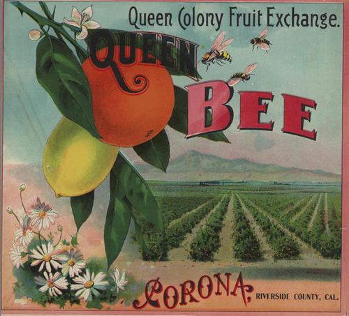 Queen Colong Fruit Exchange Packing House