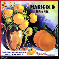 Marigold (Label Reproduction)